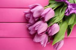 Профитекс поздравляет всех женщин с праздником весны и красоты!