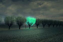 Уникальная разработка - светящиеся растения