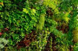 Уникальное решение для озеленения перегородок