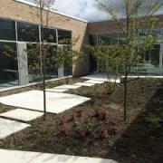 Экология в строительстве: озеленение зданий